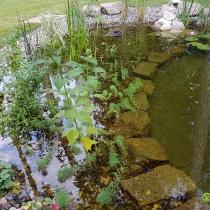 Jezero na zahradě v Klánovicích